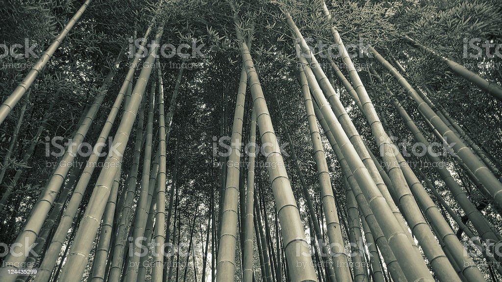 bamboo forest background royalty-free stock photo