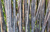 Bamboo forest detail