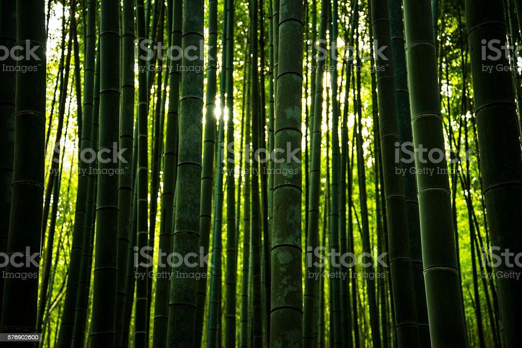 Bamboo Forest in Japan, Arashiyama, Kyoto stock photo