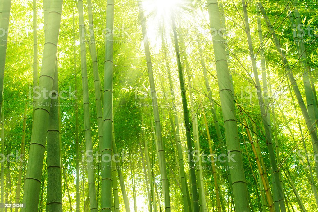 Bamboo Forest, Kyoto, Japan stock photo