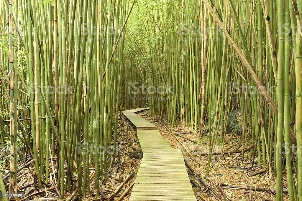 Bamboo Forest - Maui stock photo
