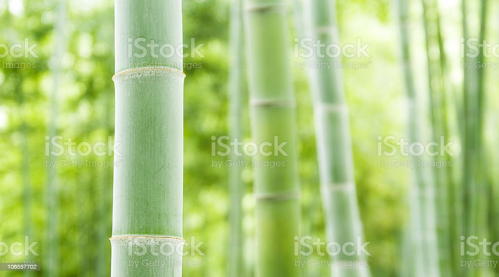 Bamboo forest, natural green background stock photo
