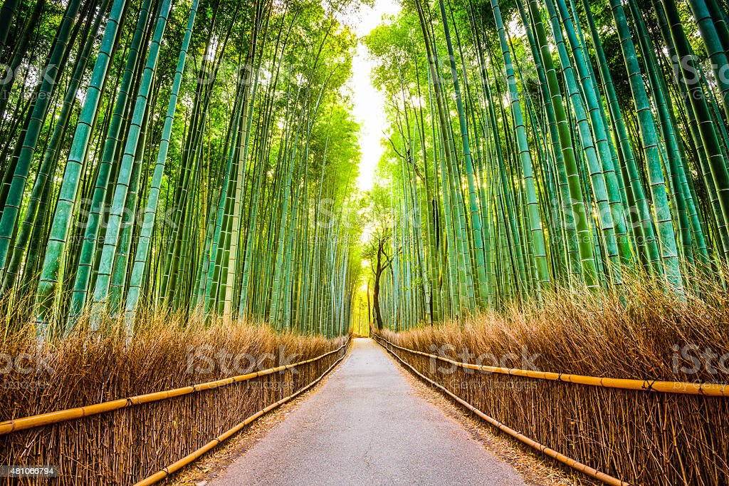 Bamboo Forest of Kyoto stock photo