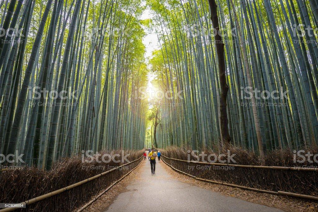 Bamboo forest path in Arashiyama, Kyoto - first morning visitors stock photo