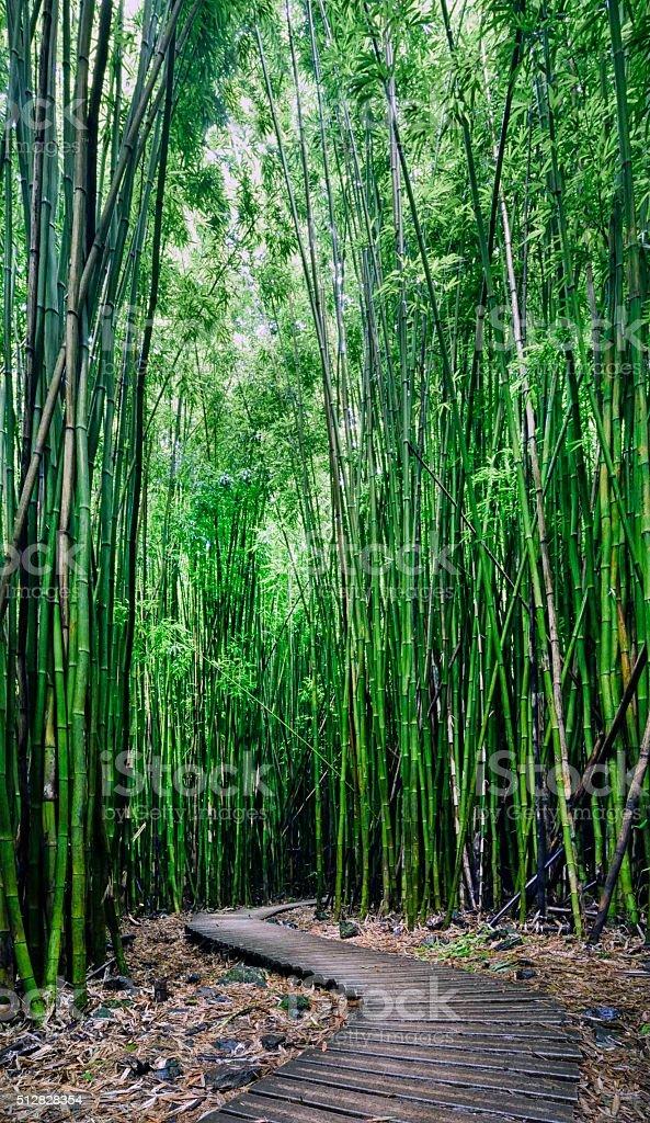 Bamboo forest, Pipiwai trail, Kipahulu state park, Maui, Hawaii stock photo