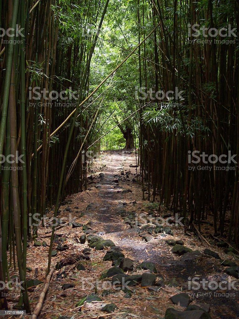 Bamboo Forest Trail Haleakala National Park Hana Maui Hawaii royalty-free stock photo