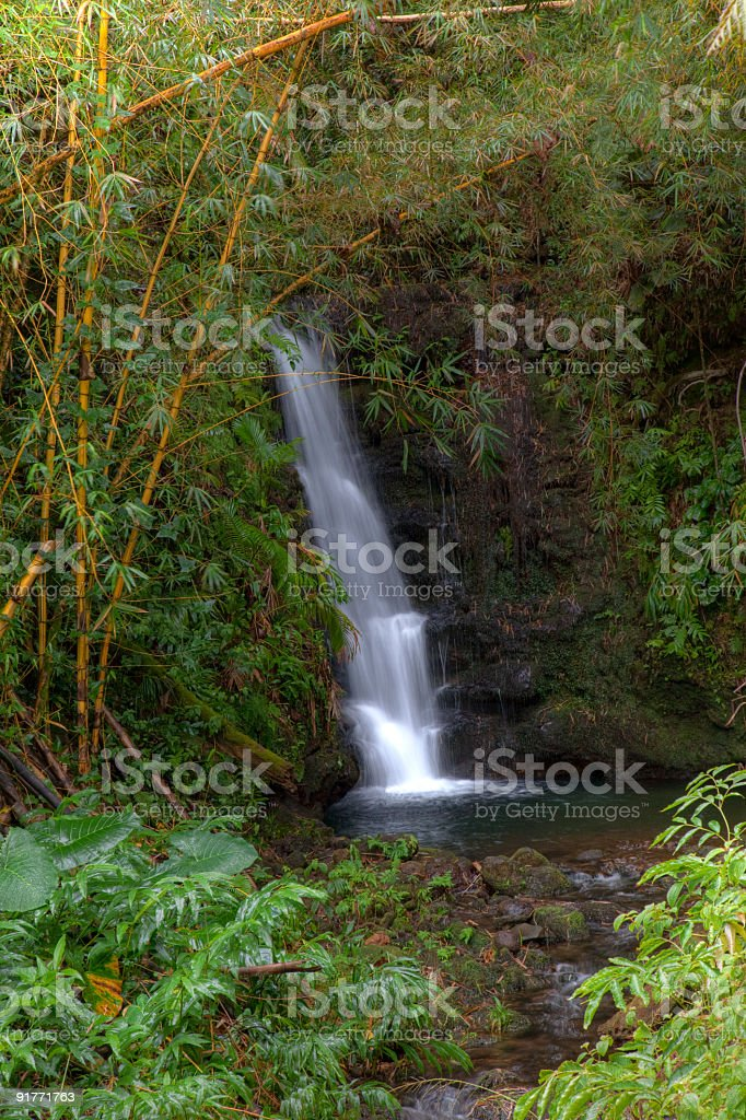 Bamboo Forest Waterfall stock photo