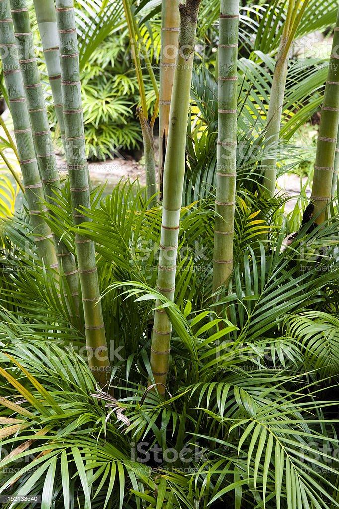 Bamboo garden royalty-free stock photo