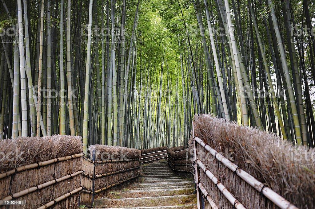 Bamboo Garden stock photo