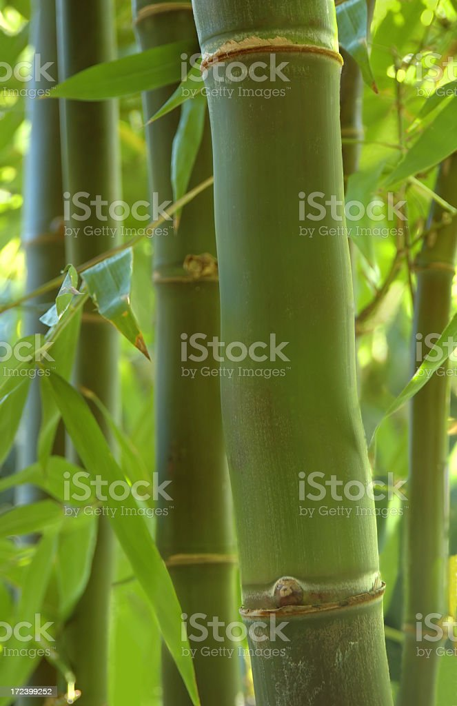 Bamboo garden royalty-free stock photo