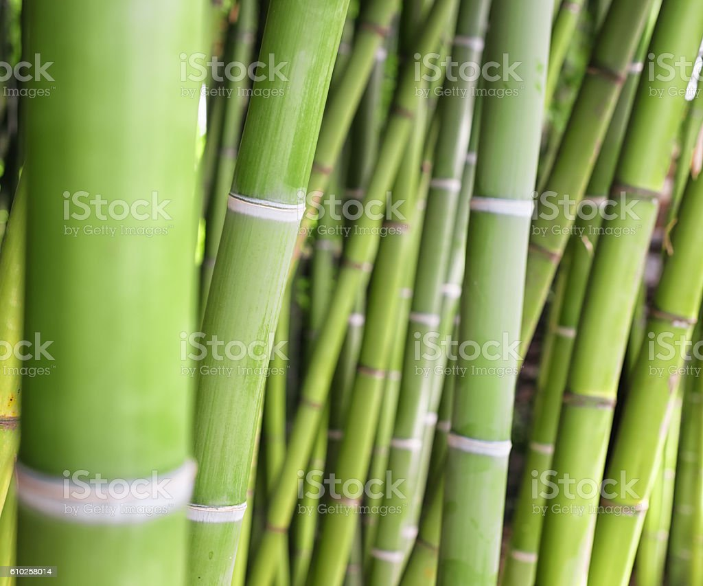 bamboo groove stock photo
