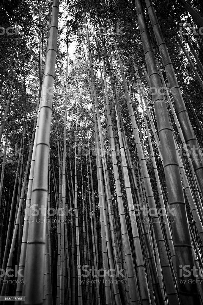 Bamboo Grove Arashiyama Kyoto Japan stock photo