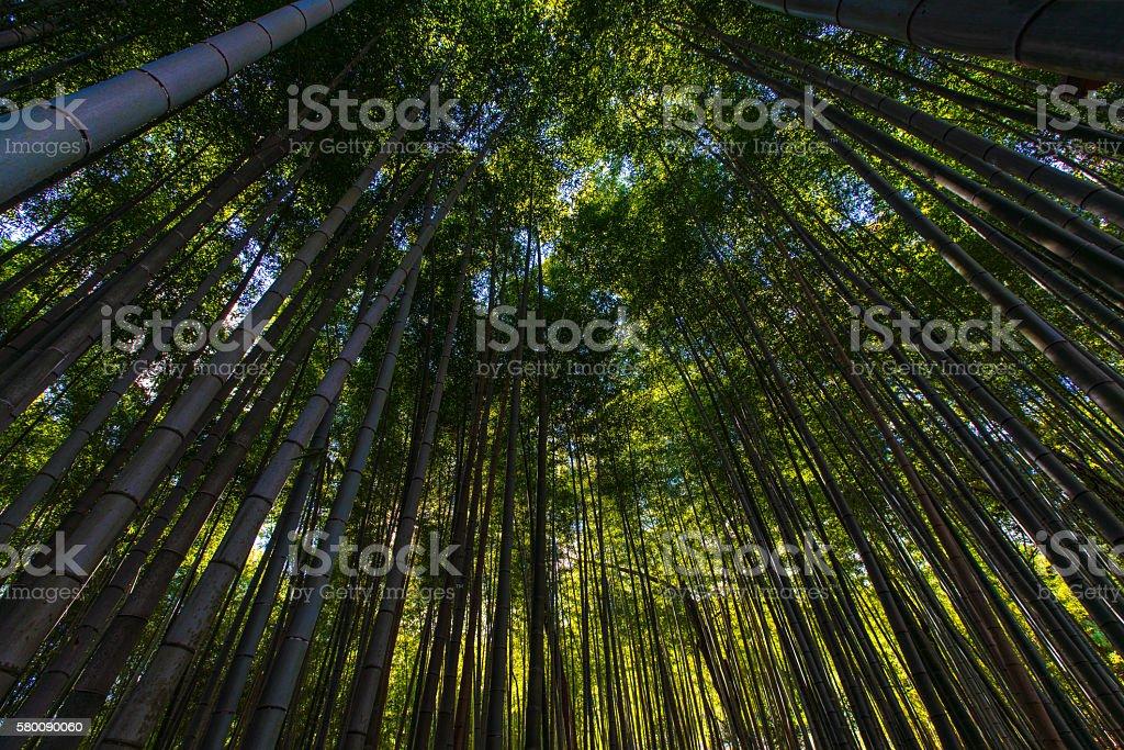 Bamboo Grove in Adashino Nenbutsu-ji Temple, Tokyo stock photo