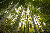 Bamboo Grove in Kyoto, Japan