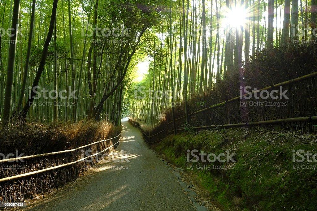 Bamboo Grove Road, Arashiyama, Kyoto, Japan stock photo