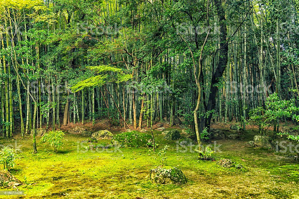 Bamboo growth stock photo