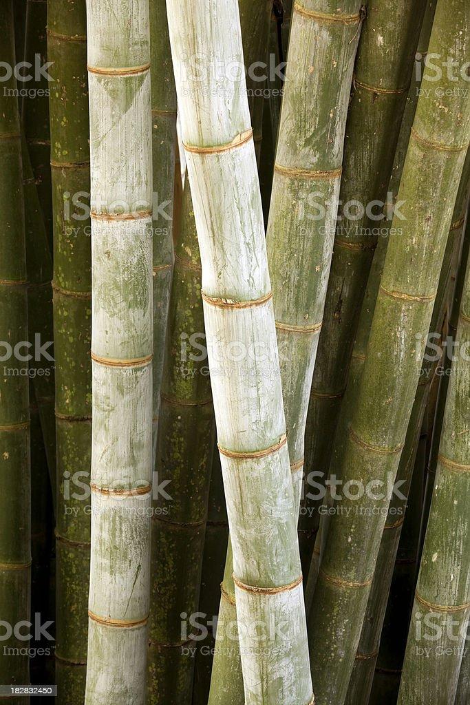 bamboo kandy sri lanka royalty-free stock photo