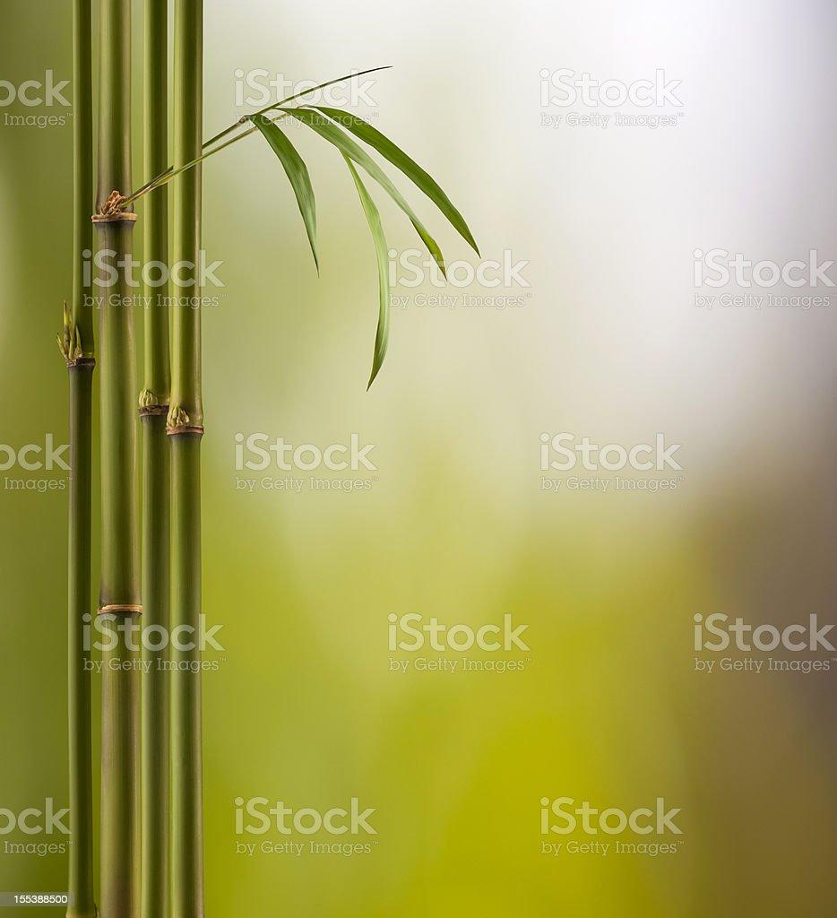 Bamboo Land royalty-free stock photo