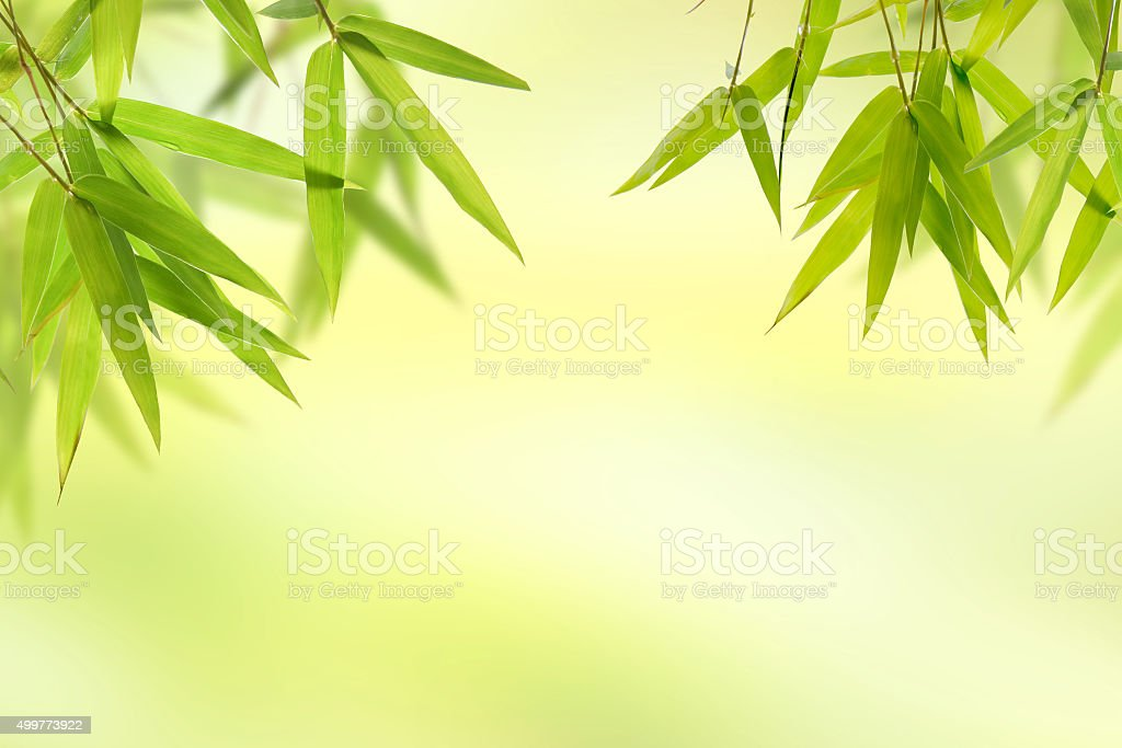 Bamboo leaf and light soft green background stock photo