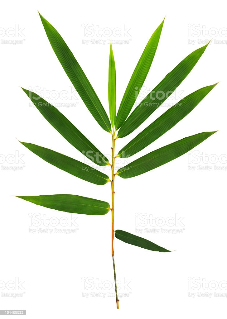 Bamboo leaves isolated on white with clipping path. stock photo