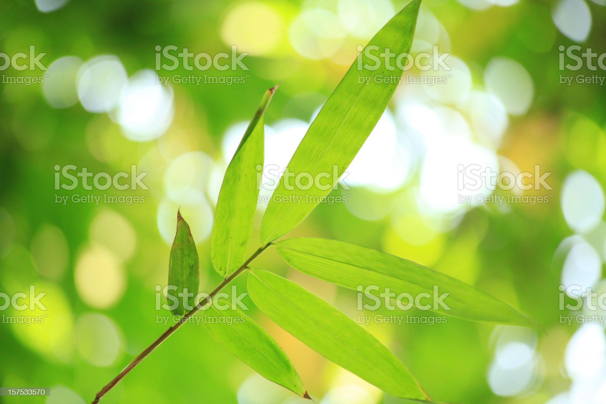 bamboo leaves royalty-free stock photo