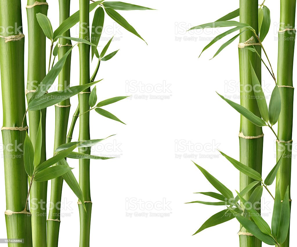 Bamboo Living royalty-free stock photo