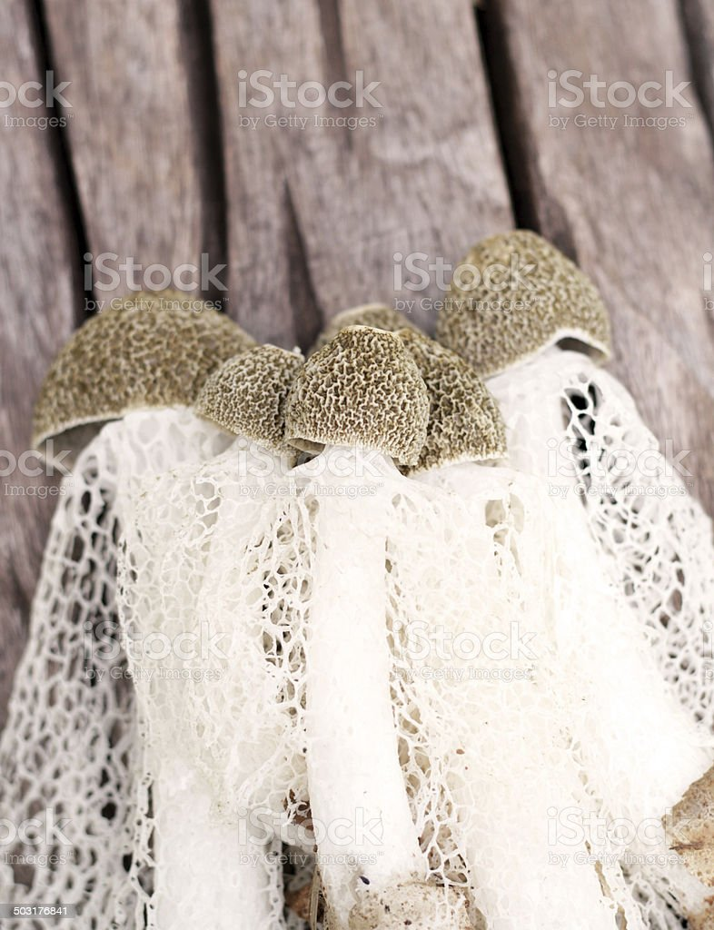 Bamboo mushroom on wooden background. stock photo