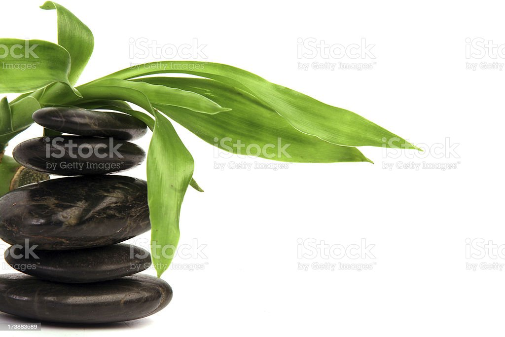 Bamboo on a stone. stock photo