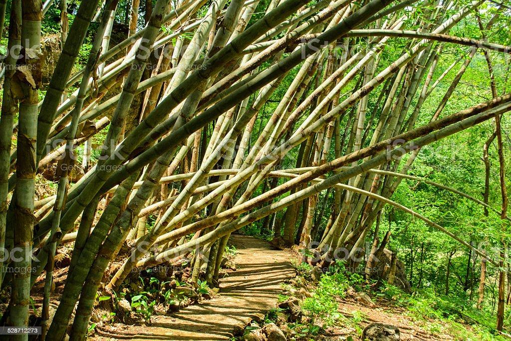 Bamboo park stock photo