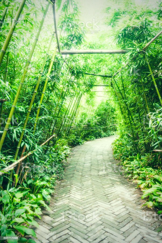 bamboo path in park stock photo