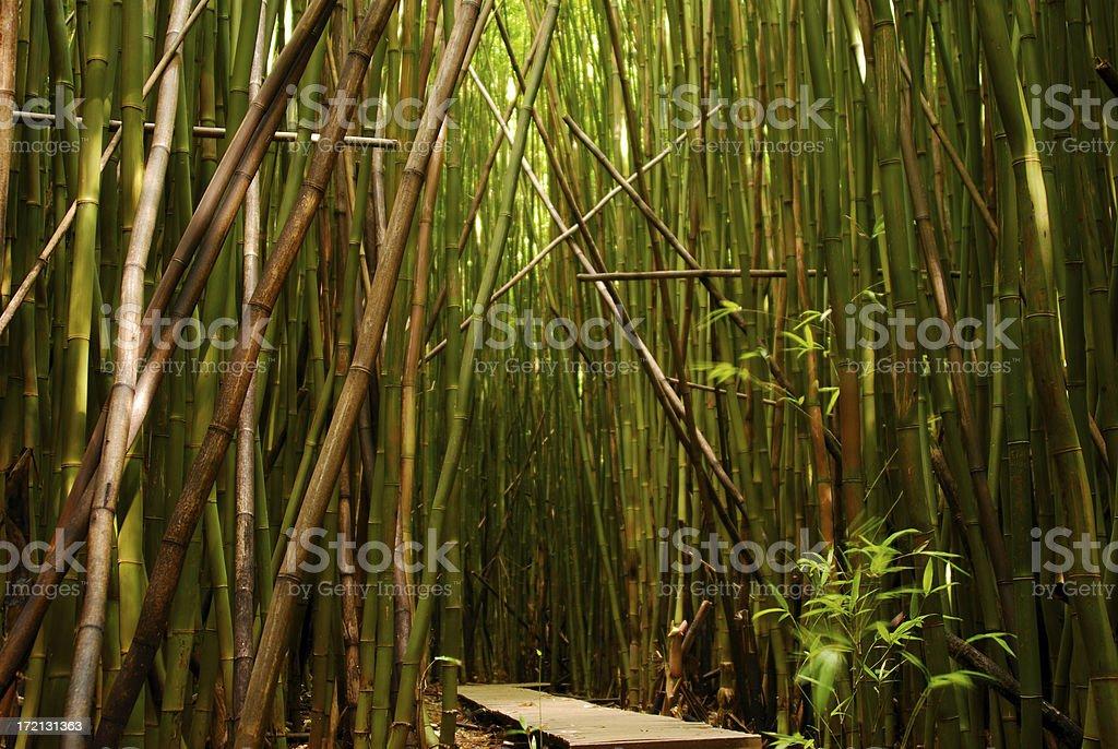 Bambus Weg#2 Lizenzfreies stock-foto