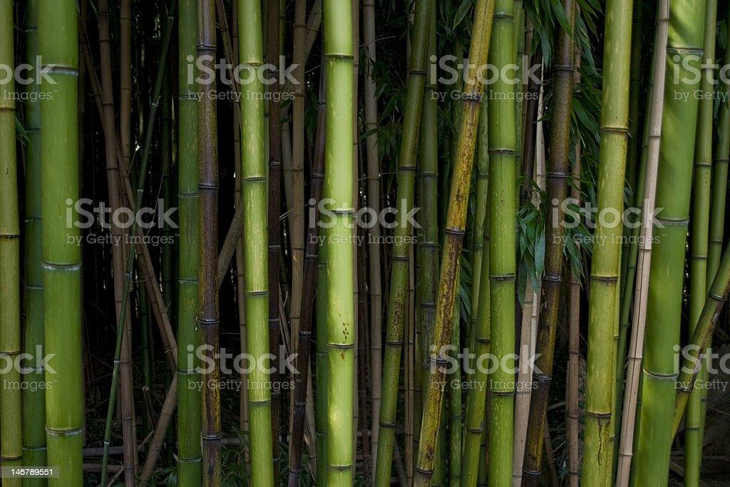 Bambus Lizenzfreies stock-foto