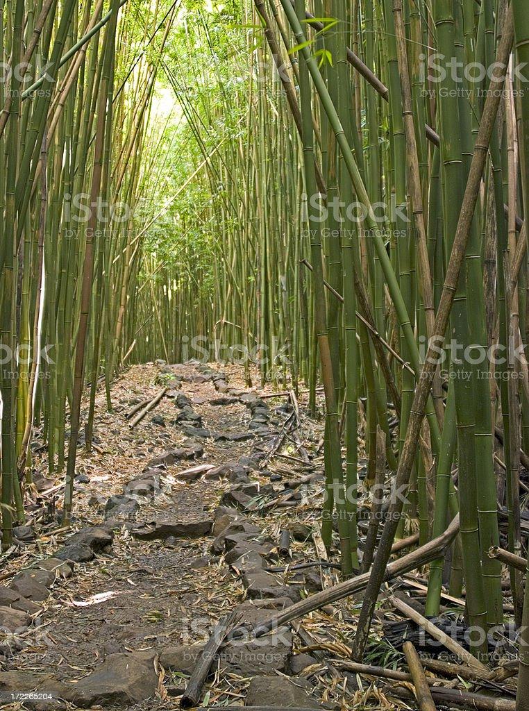 Bambus#3 Lizenzfreies stock-foto