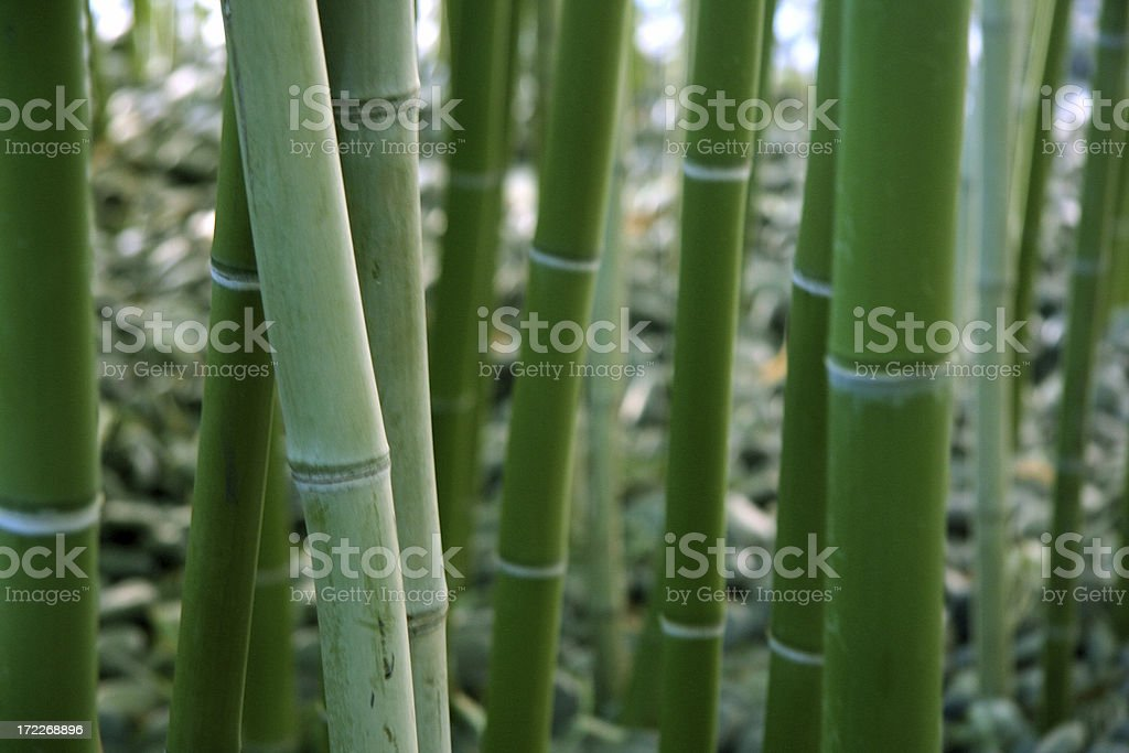 Bamboo royalty-free stock photo