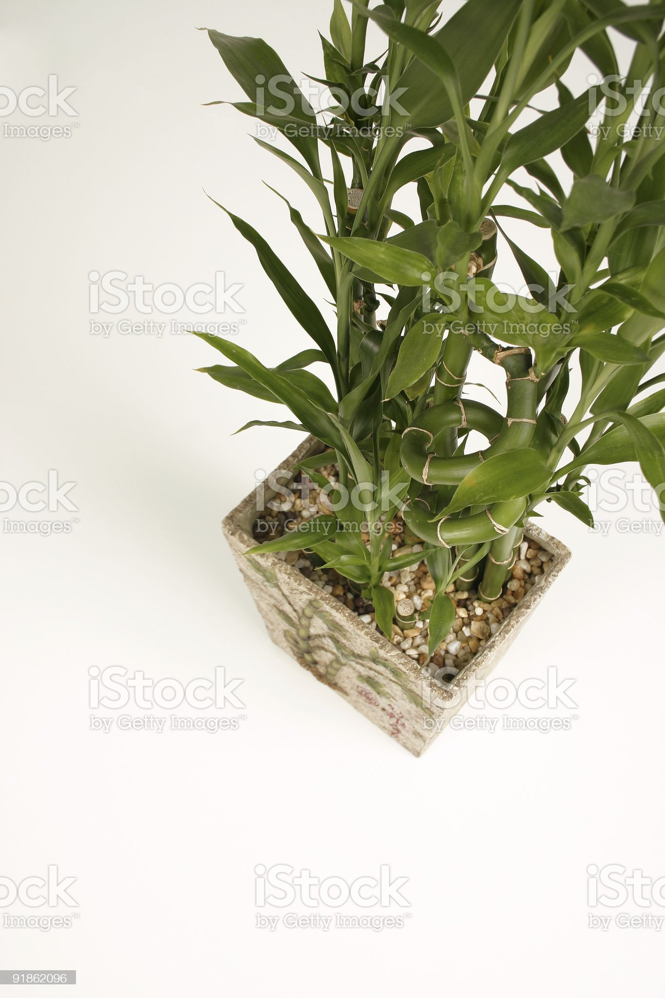 Bamboo Plant royalty-free stock photo