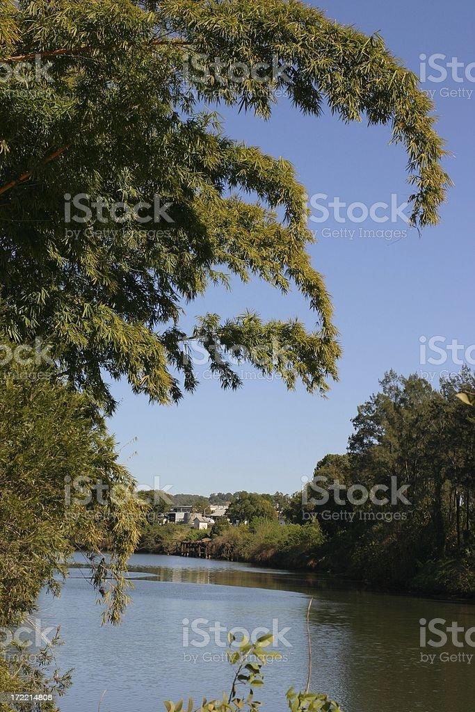 Bamboo River royalty-free stock photo