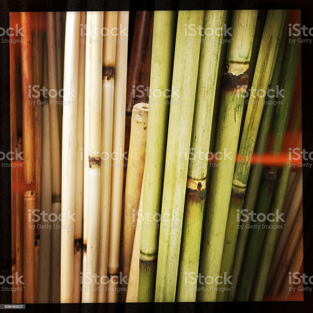Bamboo Shoots and Light Leaks stock photo