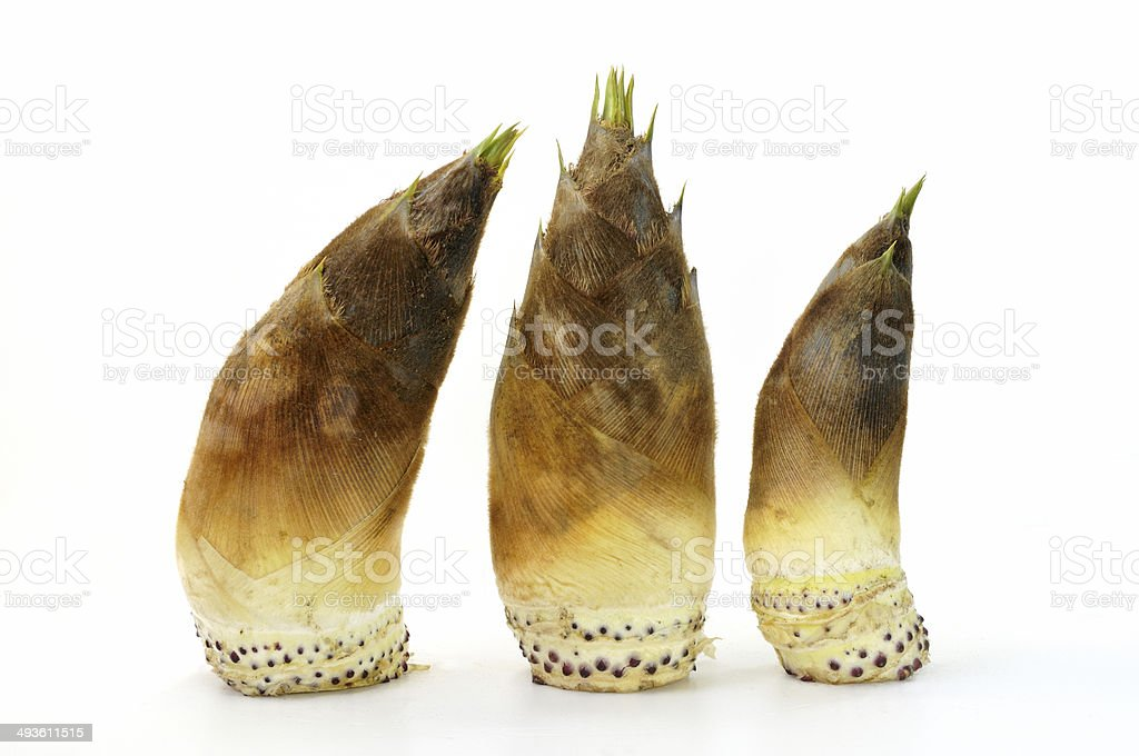 Bamboo shoots were harvested stock photo