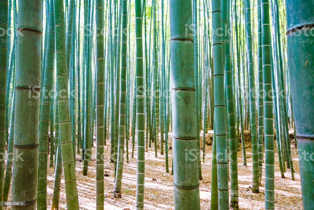 Bamboo trees detail stock photo