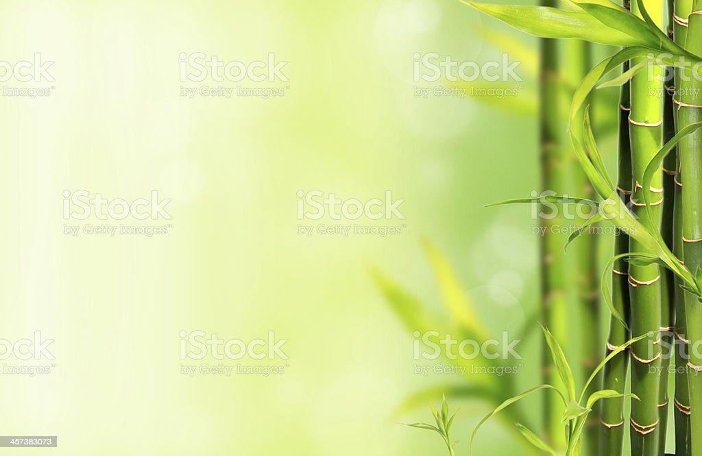 Bamboo trees stock photo
