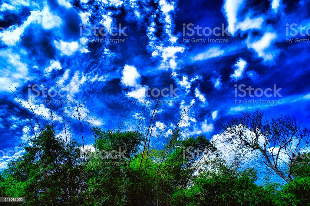 Bamboo Trees With Blue and Cloudy Sky stock photo
