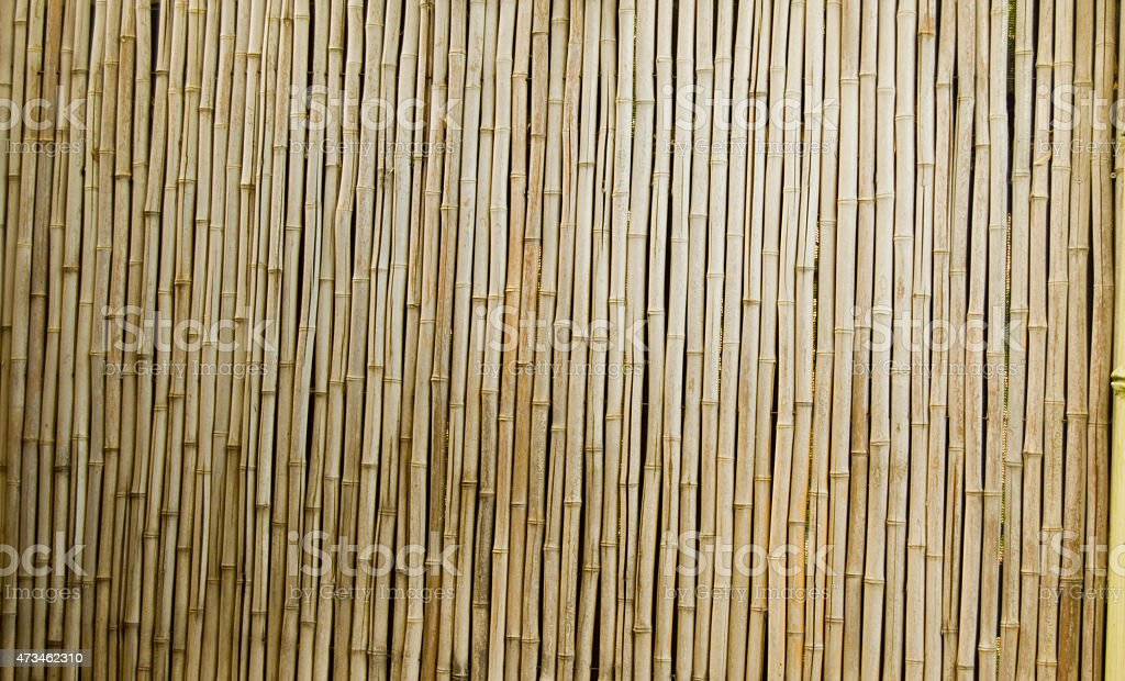 Bamboo Wall Texture stock photo