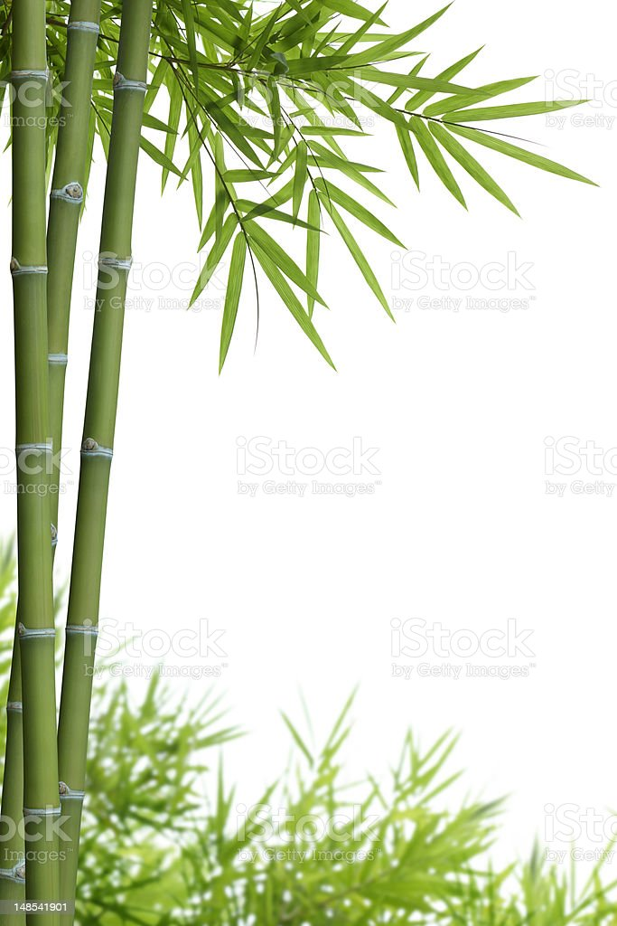 bamboo with leaves stock photo