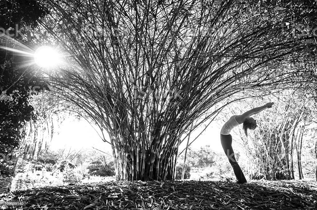 Bamboo Yoga stock photo