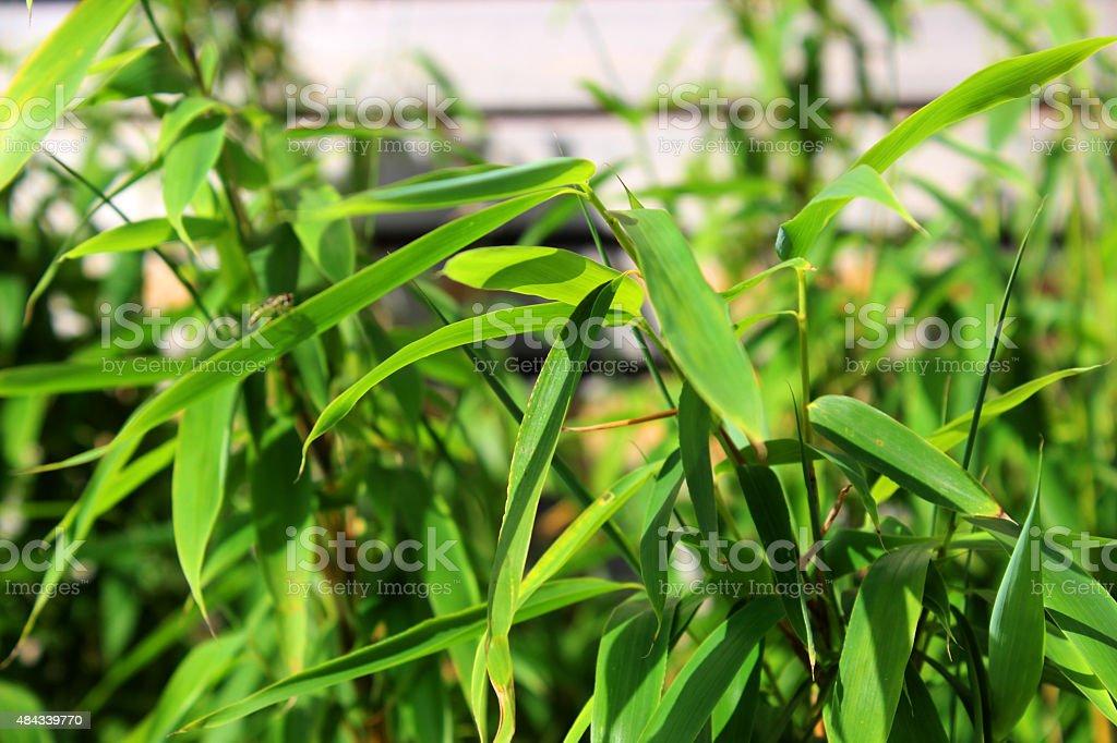 Bambus Detail stock photo