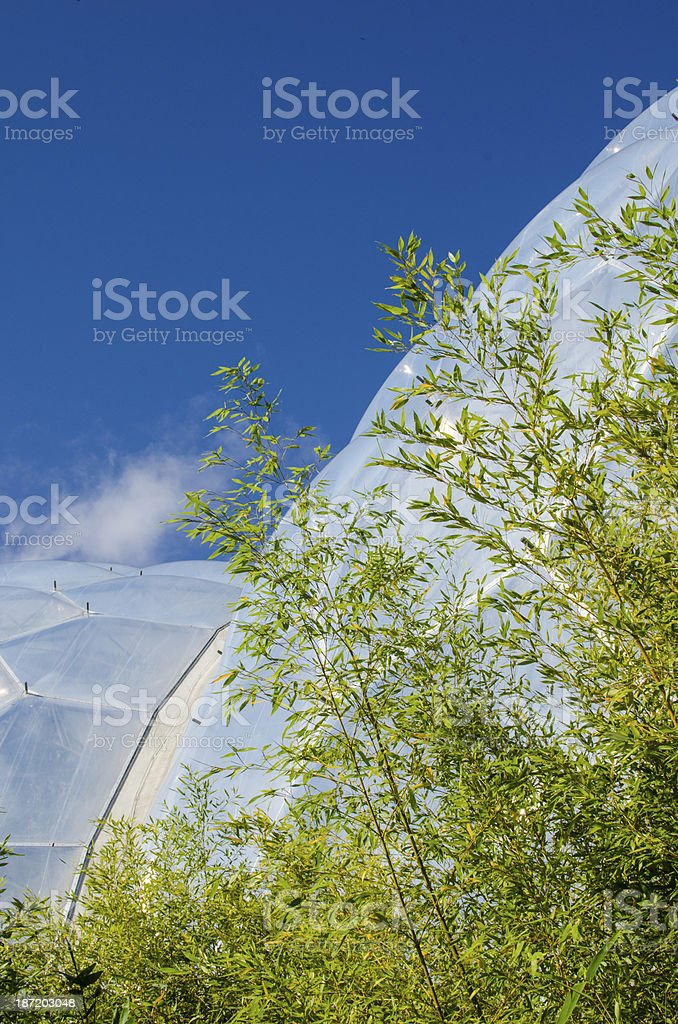 Bambus in front of glass dome royalty-free stock photo