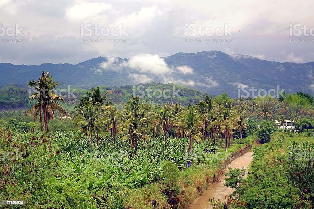 Banana and Palm Trees in Southern Taiwan stock photo