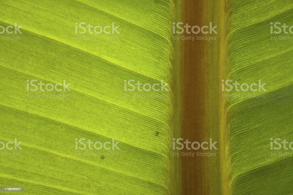 바나나 닽힌 바라요 royalty-free 스톡 사진