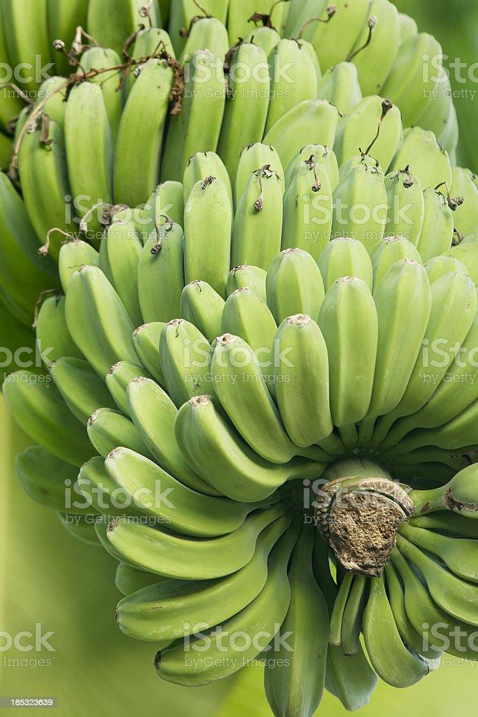 Banana cluster stock photo