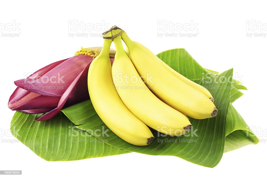 Banana fruits with blossom stock photo